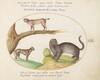 Plate 13: A Tiger, a Lynx, and a Jaguar(?)