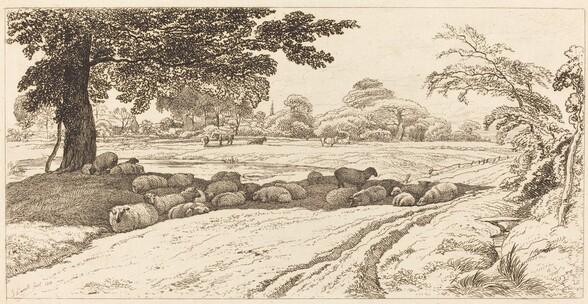 Sheep at Noon