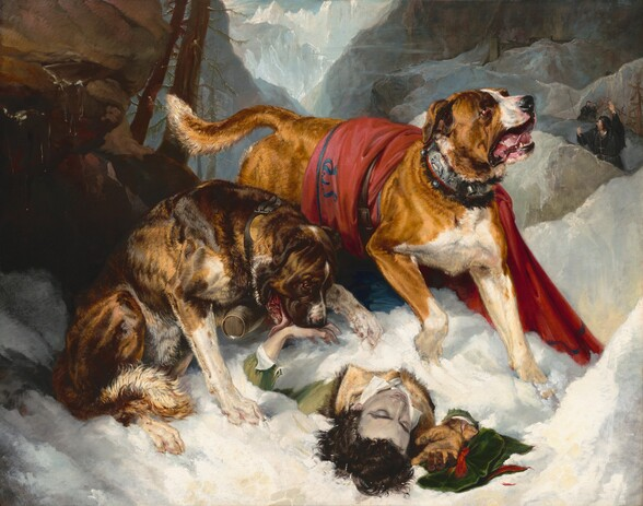 Two large dogs approach a man lying unconscious and mostly buried in the snow in this horizontal painting. The head of the man lies towards us, at the lower center of the composition, and the dogs seem close to us. In the center of the painting is a large tan and white dog with short glossy fur and floppy ears, its jowly mouth hanging open and pink tongue visible. It paws at the snow partially covering most of the body of a man wearing an olive-green coat with a fur collar and white shirt, directly beneath the dog. The dog looks up toward our right, and its body and white tipped tail recede diagonally into the picture toward the left. There is a red blanket with black edging thrown over the dog's back and the hound wears a wide, fur-lined silver collar ornamented with metalwork lions and bells. The second dog, a dark brown brindle color, sits to the immediate left of the first dog. It gazes downward toward the center at the prone person and bends its head down to lick a bare pale, pink hand that protrudes from underneath the snow. The brindle dog wears a small barrel around its neck on a brown buckled leather collar. The man's dark brown hair falls over the snow. His pale grey face is upward, and his shoulders are visible while his arms splay out, and the rest of his body, extending into the picture, is snow covered. The man's eyes are closed. His right hand (on our right also), with a tan leather glove, reaches out toward us from the snow, while a green velvet cap with a red ribbon lies underneath the hand. The scene is enclosed by large, angular steel and blue-grey boulders and rock formations, with two craggy pine trees above. Beyond lies a mountain landscape with a V-shaped pass at the center top framed by the steep ascent of jagged, snowy hillsides and a sliver of blue sky at the very top. At the right in the middle distance, three bearded men wearing black caps and what appear to be clerical robes hurry toward the dogs. The nearest of the clerics holds up a st
