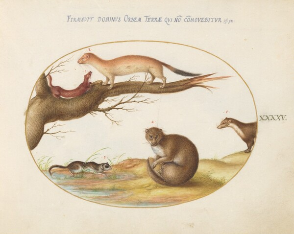 Plate 45: Weasels, a Ferret, and a Nut Mouse