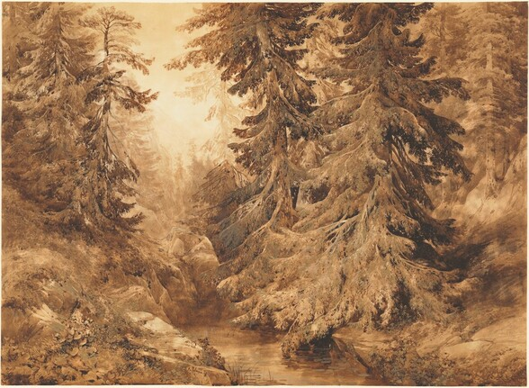 An Ancient Pine Forest with a Mountain Stream