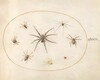 Plate 39: Eight Spiders