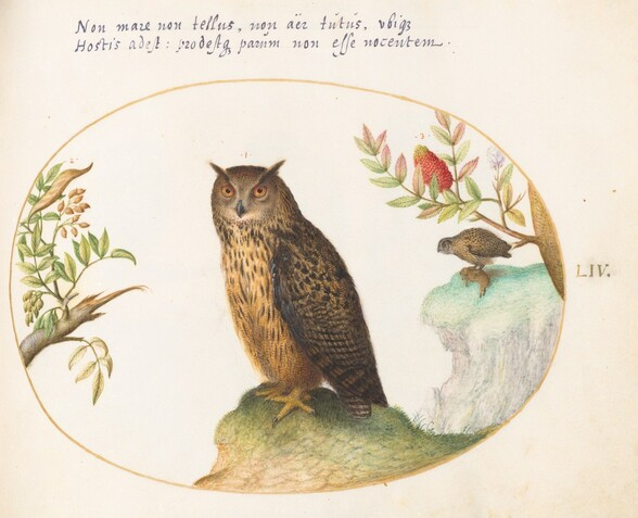 Plate 54: An Owl, with a Second in the Distance Eating a Rabbit