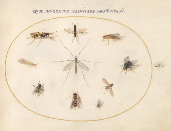 Plate 60: Flies and Other Insects