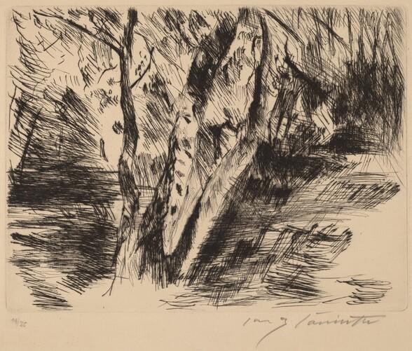 Birkenstämme im Tiergarten (Birch Trees in the Tiergarten)