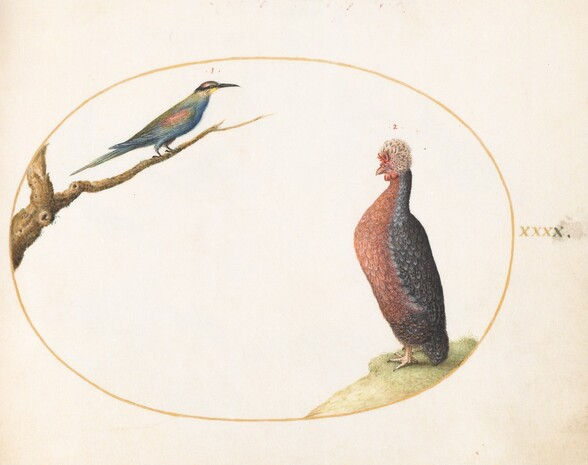 Plate 40: European Bee-Eater and Exotic Chicken
