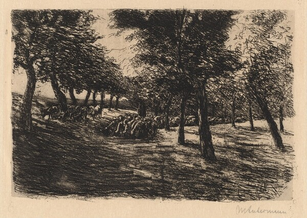 Herd of Sheep Under Trees