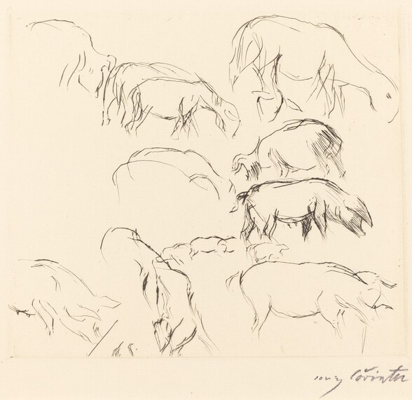 Verschiedene Tierstudien (Animal Studies)
