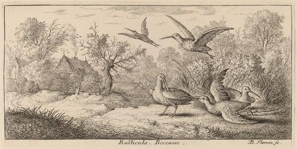 Rusticula, The Woodcock