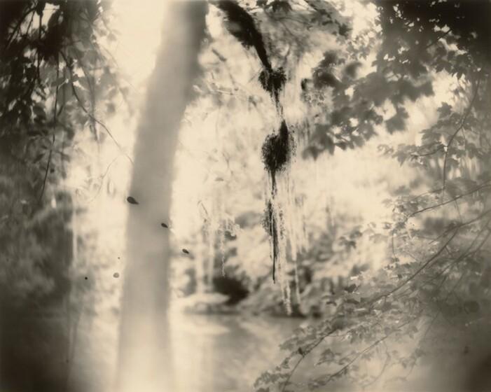 Sally Mann, Deep South, Untitled (Three Drips), 1998