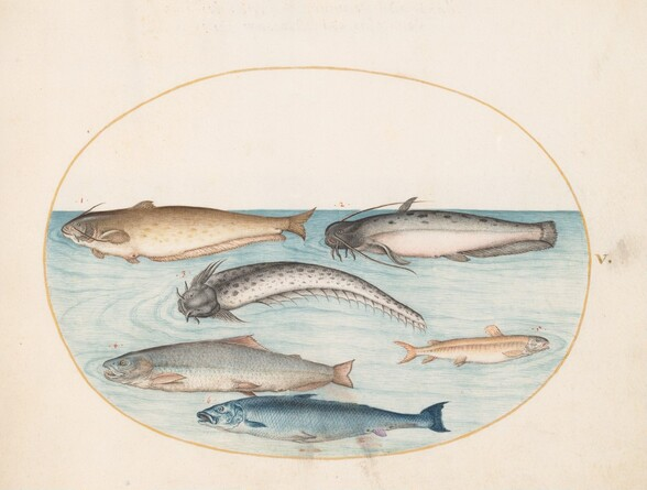 Plate 5: Three Catfish, a Salmon, and Two Other Fish