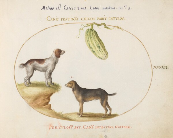 Plate 37: Two Spaniels with a Gourd