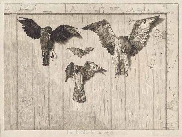 Birds Nailed to a Barn Door (Le haut d