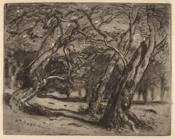 Untitled (Wooded Landscape)