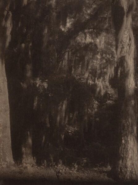 Cypress Trees, South Carolina