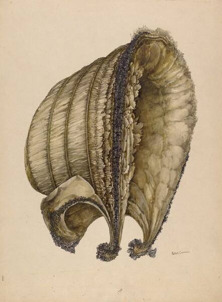 Silk Bonnet