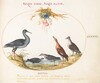 Plate 43: Sandpipers and Other Shore Birds Admiring a Garland of Flowers