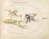 Plate 44: Mantis and Mayfly with an Imaginary Insect