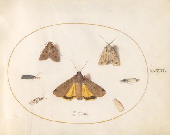 Plate 28: Eight Moths