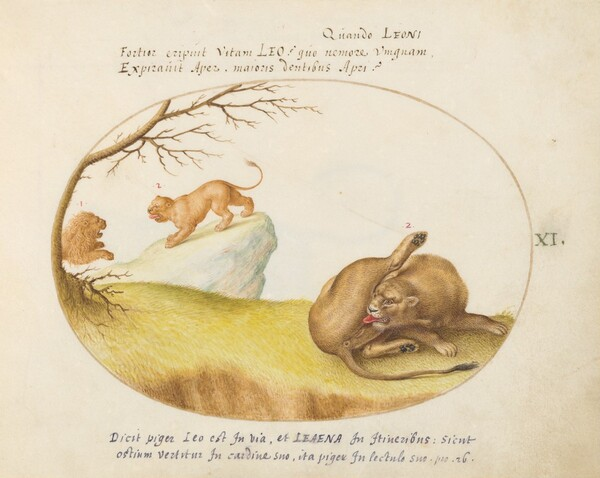 Plate 11: A Lioness with Two Lions in the Background