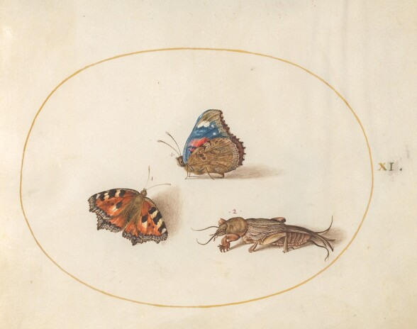 Plate 11: Small Tortoiseshell and Red Admiral Butterflies with a Mole Cricket