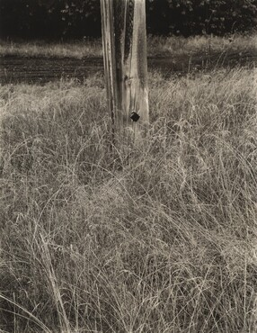 image: Grass and Flagpole