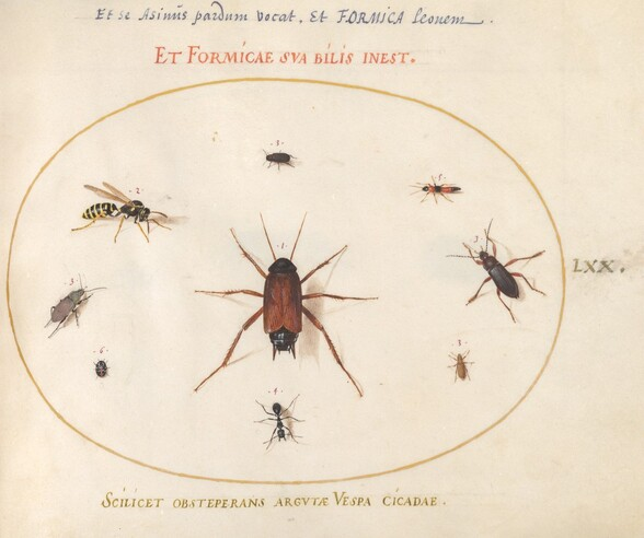Plate 70: A Roach Surrounded by Insects