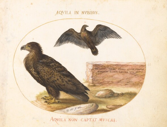 Plate 2: Two Eagles