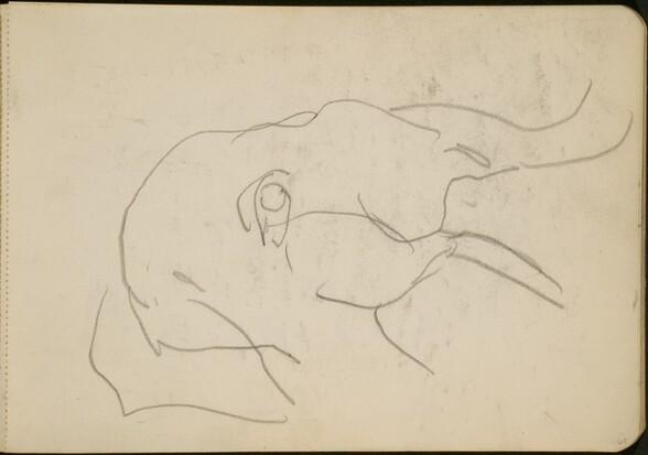 Elefantenkopf (Head of an Elephant) [p. 65]