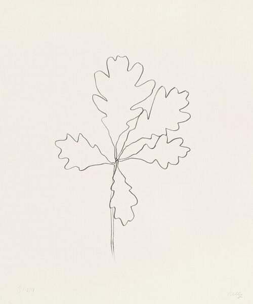 Oak I