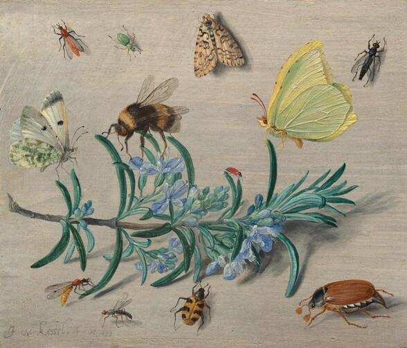 """A sprig of flowering rosemary laying against an ivory-white background and the twelve insects that surround it fills this horizontal painting. Stretching nearly the length of the composition with the cut end to our left, the rosemary has blunted, needle-like, gently curling teal-green leaves and small periwinkle-blue flowers along the ash-brown stem. Several insects seem to perch on the sprig while others are seen as if looking from overhead, appearing to rest on the off white-colored surface or background. The three largest insects perch along the top of the sprig, with an ivory-white butterfly with moss-green and black markings to the left, a black and golden, fuzzy bumblebee near the center, and a lemon-yellow butterfly with red antennae to our right. A tiny red insect, perhaps a ladybug without spots, sits on a leaf between the bee and yellow butterfly, and a small wasp-like insect rests on a leaf in at the lower left. Another mosquito-like insect rests on the surface nearby, next to a beetle with a honey-orange body with black, almost tiger-like stripes. A large cockroach sitting near the lower right corner has six spindly legs, a mahogany-colored abdomen, a black thorax, and tiny, black head. Spaced somewhat evenly across the top of the panel are a brick-red, winged insect to the left, a mint-green, beetle-like bug near a moth patterned with bone-white and black, and a black, fly-like insect to our right. Lit high and to our left, the rosemary and insects cast shadows on the surface. The artist signed and dated the work with gray in the lower left corner: """"J v. kessel . . f. Ao 1653."""""""