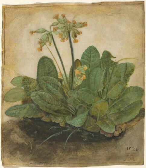 <p>Albrecht Dürer, Tuft of Cowslips, 1526