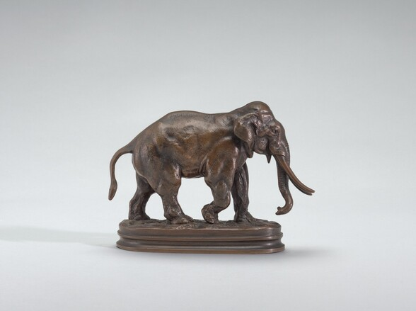 Asian Elephant Walking