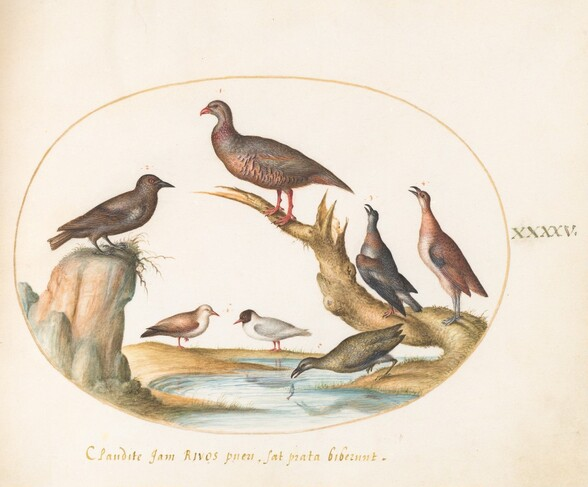 Plate 45: Gulls and Other Birds on a Shore