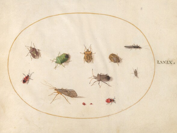 Plate 79: Twelve Insects, Including Shield Bugs