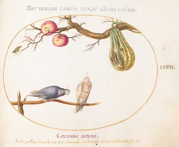 Plate 67: Two Doves beneath a Gourd and Apples