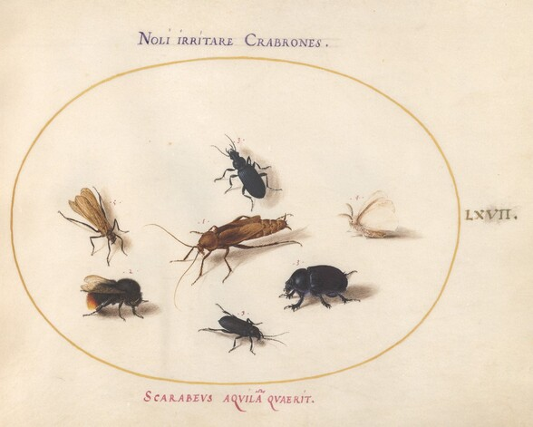 Plate 67: Seven Insects, Including a White Butterfly and a Bee