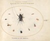 Plate 65: A Cricket Surrounded by Insects