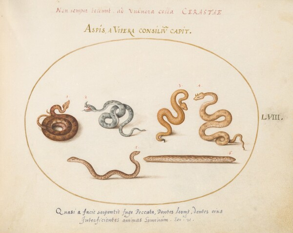 Plate 58: Asps and Vipers