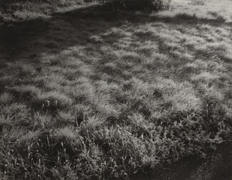 image: Grass and Frost