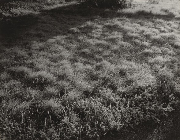 Grass and Frost