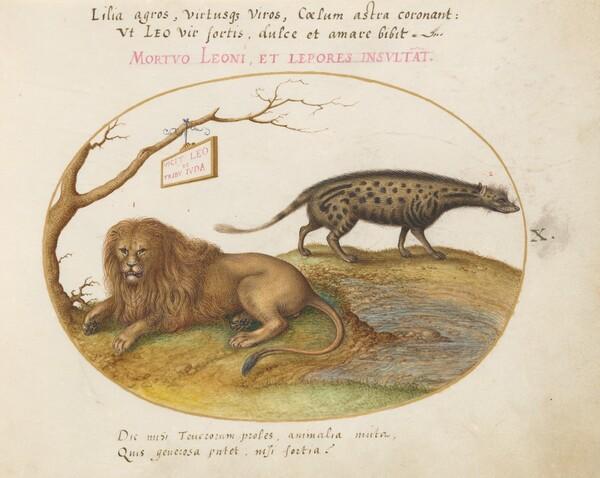 Plate 10: A Lion and a Civet Cat