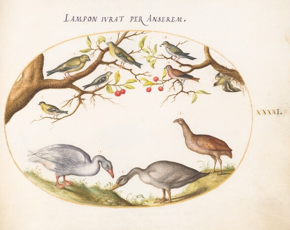 Plate 41: Two Gray Geese with Songbirds in a Cherry Tree