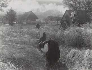 image: Harvesting, Black Forest