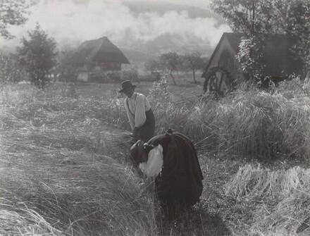 Harvesting, Black Forest