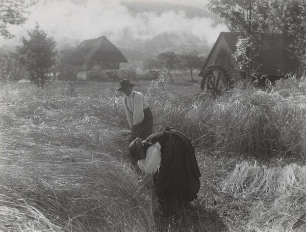 Harvesting, Black Forest