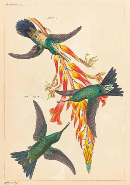 Three Hummingbirds with Plant