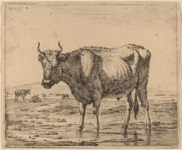 Bull Standing in Water