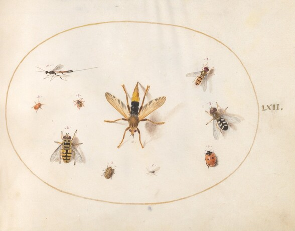 Plate 62: Ten Insects