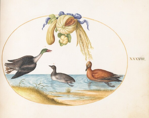 Plate 38: Merganser with Two Other Waterfowl and a Garland of Melons and Gourds